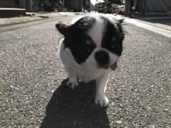 【悲報】元NMB三秋(小谷)里歩さん、仕事無さすぎて病む・・・