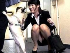 かわいい犬に近づきながら男を物色する肉食女達がガクガク痙攣イキ!春原未来・朝比奈麻里・原千草