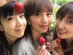 ほしのあき(41)安田美沙子(35)熊田曜子(35)が童貞狩り…もといイチゴ狩り