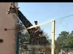 史上初!? 動物園でキリンの背中に乗った超DQNが世界中で話題に(動画あり)