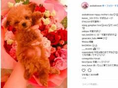 人気AV女優の明日花キララ、インスタグラマーの動物愛犬家に怒られてしまう・・・